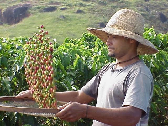 Pluma Hidalgo coffee plantation